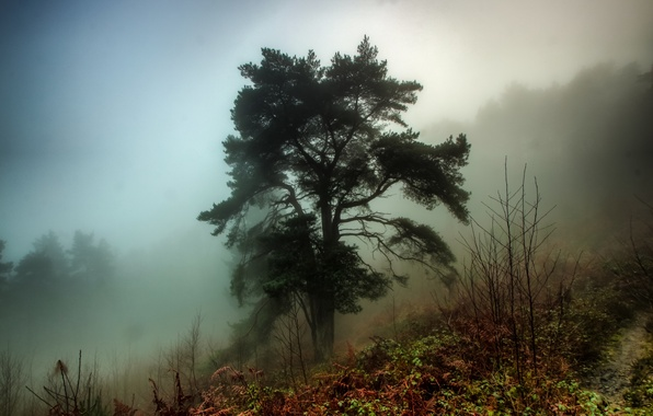 Picture autumn, forest, grass, fog, tree