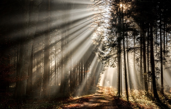 Picture road, autumn, forest, light, morning