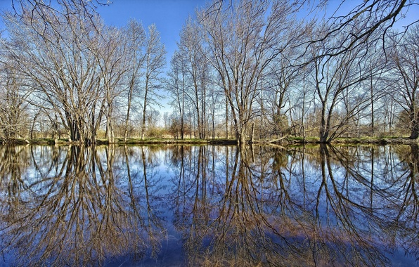 Picture FOREST, GRASS, The SKY, CLOUDS, REFLECTION, POND, TREES, BRANCHES, POND, LAKE