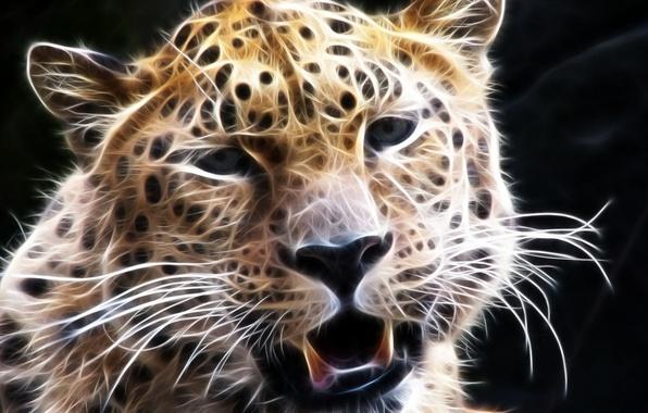 Picture mustache, look, face, leopard, 3D graphics