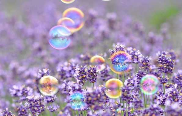 Picture purple, flowers, background, Wallpaper, mood, bubbles, wallpaper, flowers, widescreen, background, full screen, HD wallpapers, widescreen