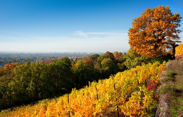 Picture autumn, the sky, leaves, trees, landscape, nature, the city, foliage, yellow, Dresden, hill, green, vineyard, …