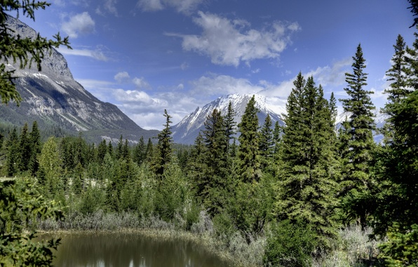 Picture forest, mountains, ate, Canada, Albert, Alberta, Canada, Jasper National Park, Jasper national Park