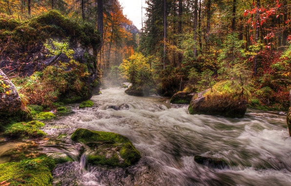 Picture autumn, forest, trees, river, stones, moss, stream
