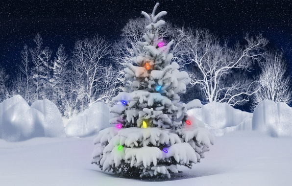 Picture winter, forest, snow, lights, new year, tree, girllady