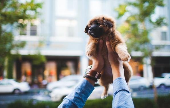 Picture watch, hands, puppy