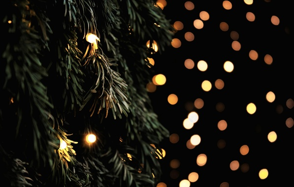 Picture branches, lights, tree, spruce, yellow, tree, garland, bokeh