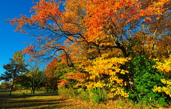 Picture autumn, forest, the sky, grass, leaves, trees, Park