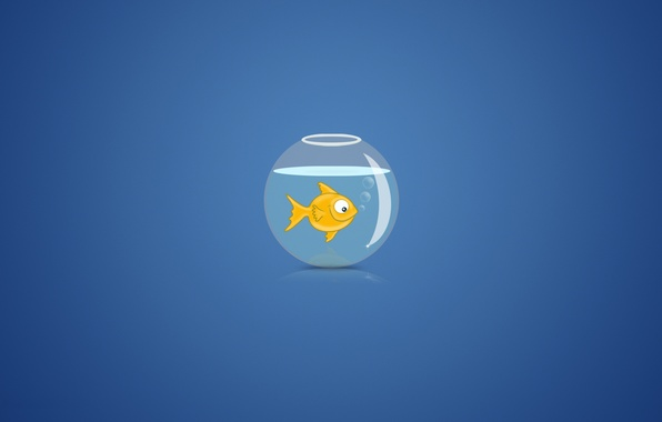 Picture water, bubbles, background, aquarium, goldfish