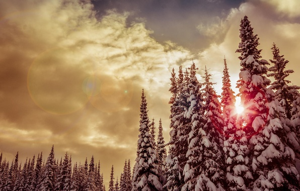Picture winter, forest, the sun, snow, trees, sunset, clouds, red, tree