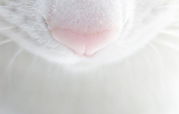 Picture mustache, Koshak, nose