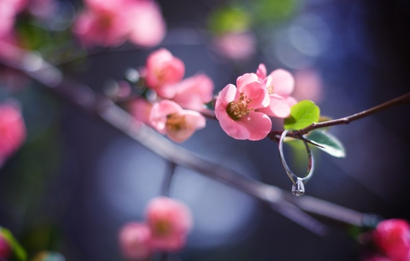 Picture flower, leaves, macro, light, nature, glare, sprig, pink, branch, spring, petals, blur, ring