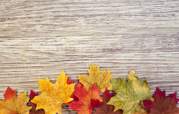 Picture tree, colorful, wood, texture, autumn, leaves, autumn leaves
