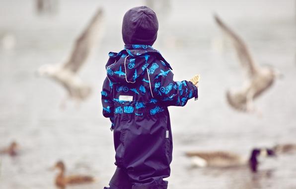 Picture flight, birds, children, background, Wallpaper, street, mood, hat, boy, pigeons