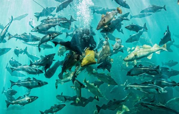 Picture fish, aquarium, food