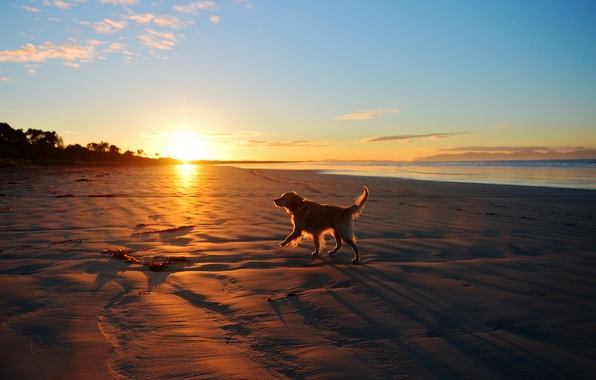 Picture sea, landscape, sunset, each, dog