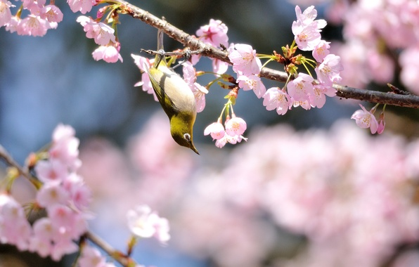 Picture flowers, tree, bird, spring, Sunny, flowering, yellow