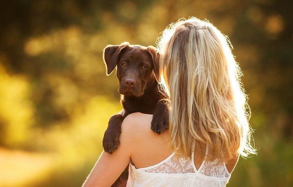 Picture girl, dog, puppy, Labrador Retriever