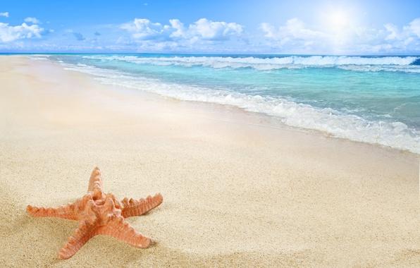 Picture beach, sea, sun, sand, starfish