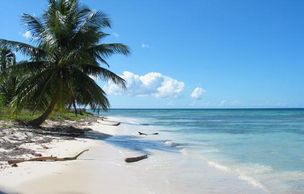 Picture sea, palm trees, Shore