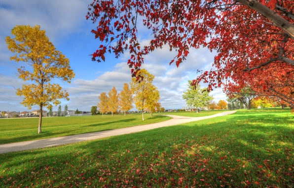 Picture autumn, the sky, grass, trees, Park, home, track