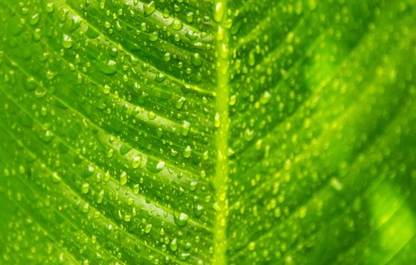 Picture drops, macro, sheet, green, veins