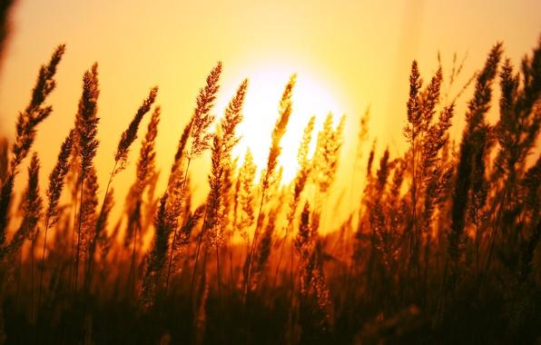 Picture field, dawn, The sun