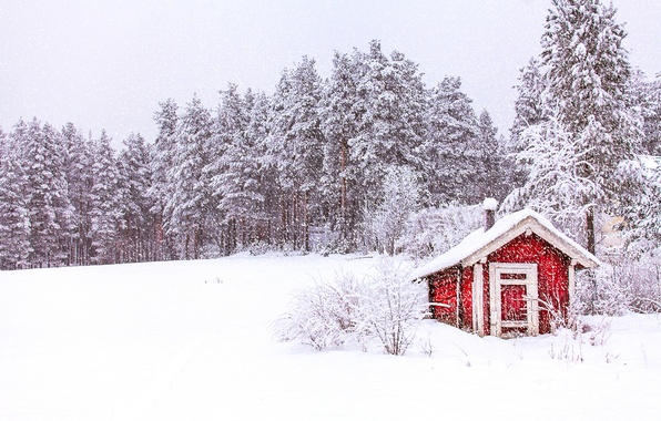 Picture winter, forest, the sky, snow, trees, nature, Norway