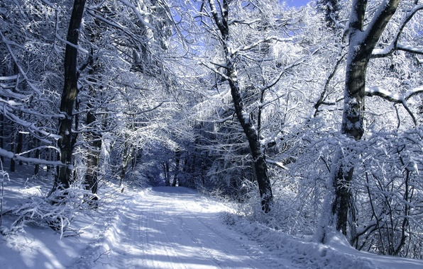 Picture cold, winter, road, snow, trees, landscape, author, Janek Sedlar