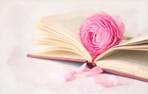 Picture flower, macro, background, book