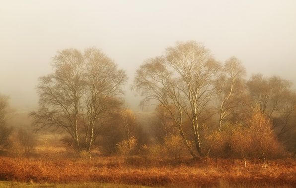 Picture field, landscape, fog