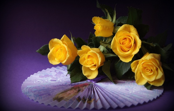 Picture roses, fan, yellow, purple background