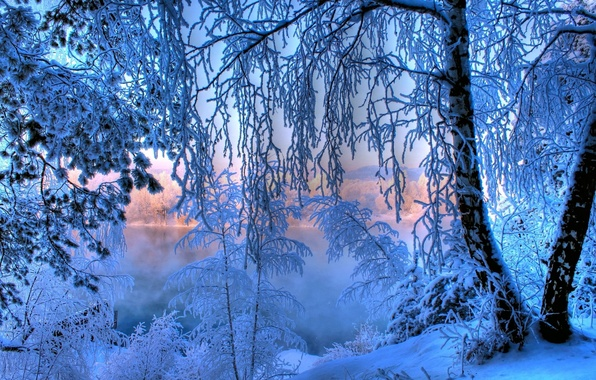 Picture frost, forest, snow, lake, tree, dawn, Winter, tale, New year, forest, winter, lake, snow, tree, …