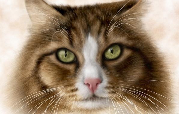 Picture cat, eyes, cat, rendering, background, Koshak