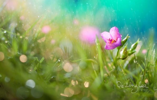 Picture flower, grass, drops, rain, bokeh