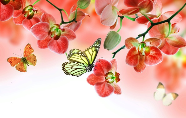 Picture butterfly, flowers, Orchid, flowers, beautiful, orchid, butterflies
