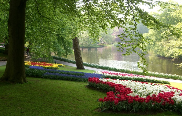 Picture greens, grass, leaves, trees, flowers, branches, pond, Park, tulips, Netherlands, colorful, daffodils, beds, Keukenhof