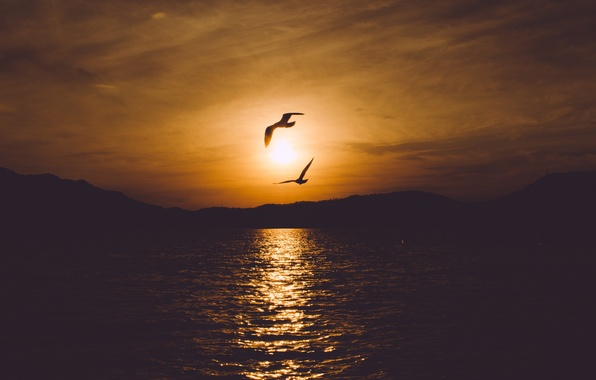 Picture sea, the sky, water, landscape, sunset, birds