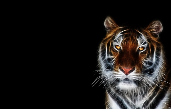 Picture face, tiger, Wallpaper, black background