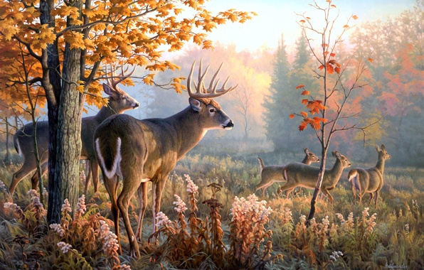 Picture animals, picture, deer, Greg Alexander, Throw Caution to the Wind