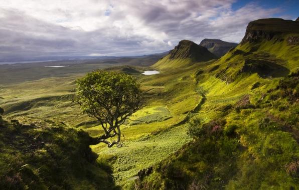 Picture mountains, tree, island, lake, Scotland, Skye