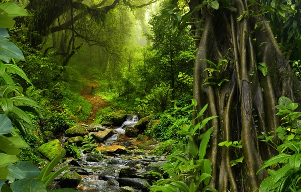 Picture greens, forest, trees, tropics, stream, stones, foliage, moss, jungle, Thailand, Jungle, path, the bushes