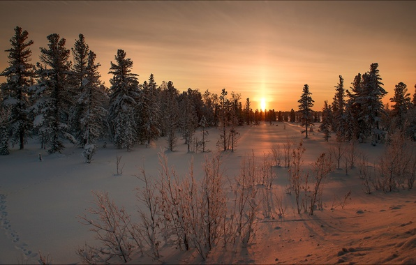 Picture winter, snow, landscape, nature, dawn, beauty, ate