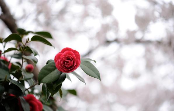 Picture flower, leaves, macro, light, red, nature, glare, plant, focus, blur, al