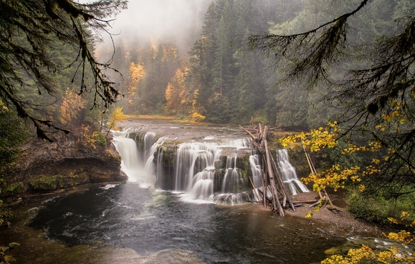 Picture forest, landscape, nature, river, waterfall