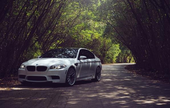 Picture Road, White, BMW, BMW, White, F10