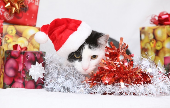 Picture cat, cat, gifts, New year, kitty, tinsel, cap, box