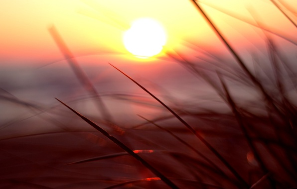 Picture greens, grass, the sun, macro, sunset, nature, background