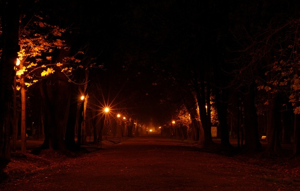 Picture road, light, trees, night, lights, city, tree, mood, street, romance, road, the evening, lights, lantern, …