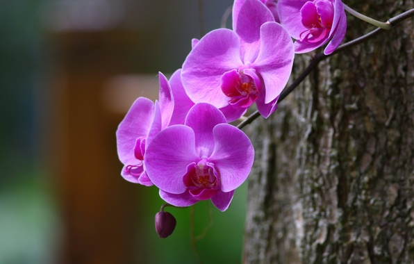 Picture macro, branch, Orchid